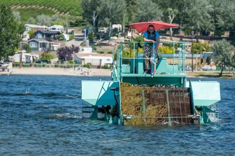 Milfoil harvester encounters mechanical setback on Osoyoos Lake